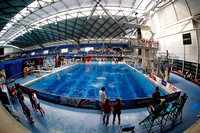 2014 British Gas ASA National Age Group Diving Championships